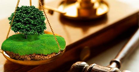 Адвокат нашла решение вывода земли из-под ареста