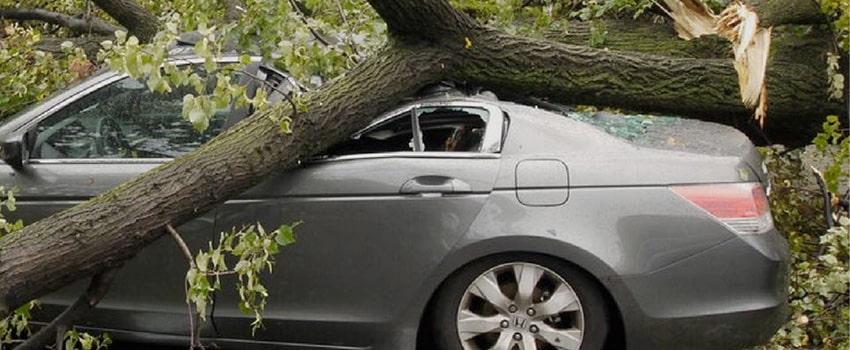 Куда звонить если на машину упало дерево