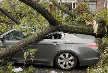 Как правильно поступить если упало дерево
